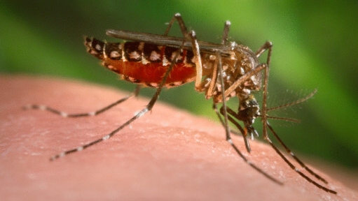 010910-home-dengue-original.jpeg