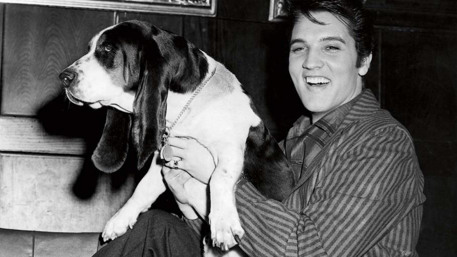 Elvis Presley cai nas graças de amigo canino anônimo