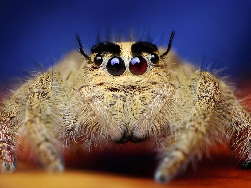 <p>O fotógrafo indonésio Roni Hendrawan registrou detalhes surpreendentes de aranhas</p>