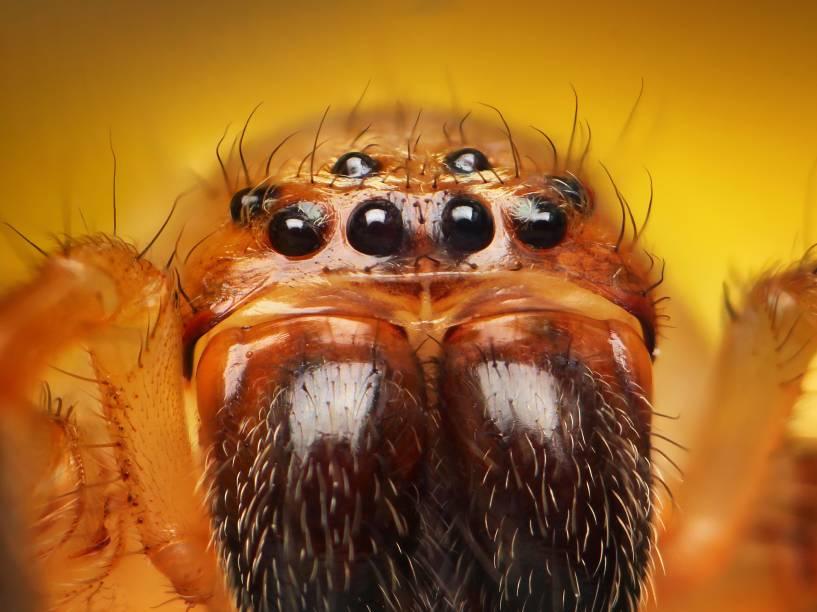 """<p>""""Nas manhãs, as aranhas não são tão agressivas. No entanto, quando estão se mexendo, fica bem complicado. Às vezes, elas ficam mais cansadas depois de pularem. Assim, fica mais fácil fotografá-las"""", conta o fotógrafo</p>"""