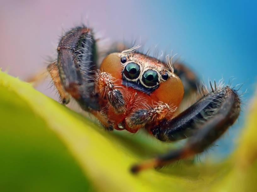 <p>Aranhas representam a maior parte dos aracnídeos. São mais de 50 mil espécies</p>