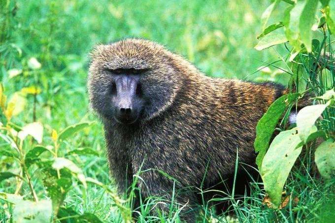 alx_babuino-anubis_original.jpeg