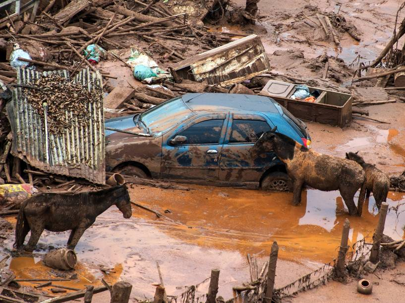 Bombeiros trabalham no resgate de animais presos em meio a lama após o rompimento de barragens de rejeitos da mineradora Samarco no Distrito de Bento Rodrigues, no interior de Minas Gerais