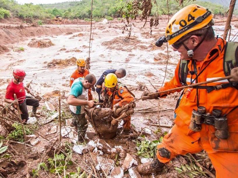 Equipe dos bombeiros resgata um cavalo em meio à lama que cobriu o distrito de Bento Rodrigues, em Mariana (MG)