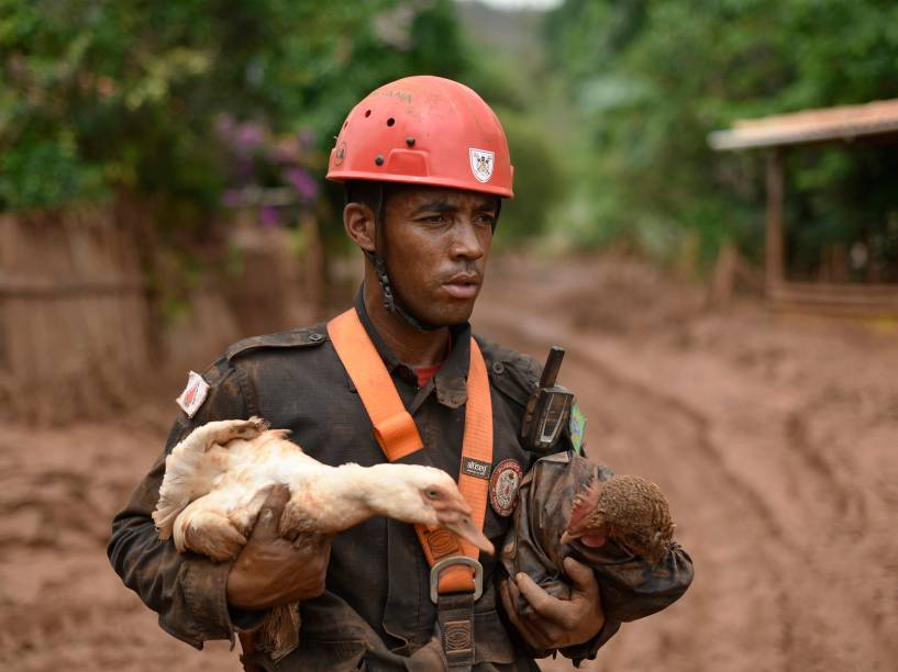 Bombeiros resgatam animais em Paracatu de Baixo, após uma avalanche de lama e lodo de mineração provocada pelo rompimento da barragem da empresa Samarco, em Minas Gerais - 09/11/2015