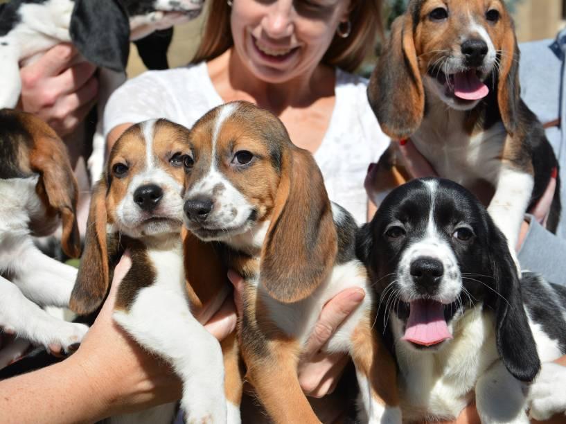 <p>Os sete filhotes nasceram em 10 de julho e são da raça Beagle.</p>