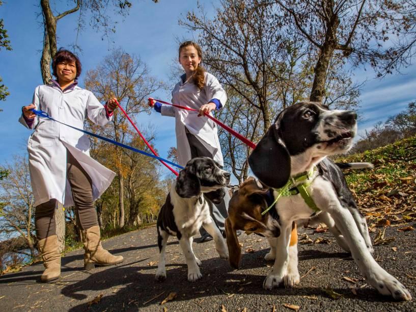 <p>Nucharin Songsasen (à esquerda) e Jennifer Nagashima, funcionárias do Instituto de Conservação Biológica Smithsonian, nos Estados Unidos, dando um passeio com três dos sete filhotes.</p>