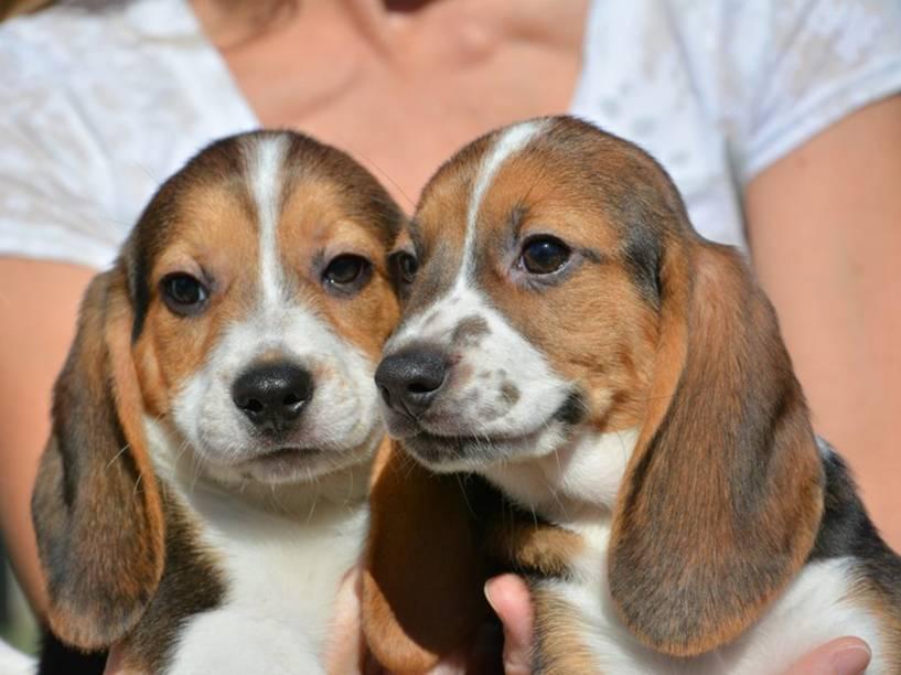 <p>Dois dos sete filhotes que nasceram por meio de fertilização in vitro.</p>