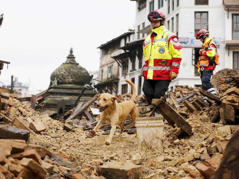 Cão do grupo de busca e resgate internacional da Alemanha vasculha pertences após o terremoto que atingiu o Nepal no sábado (25)