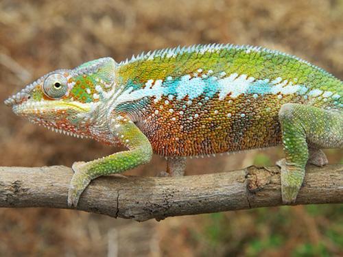 <p>Os cientistas usaram DNA, componentes anatômicos e a diversidade das cores para distinguir as espécies</p>