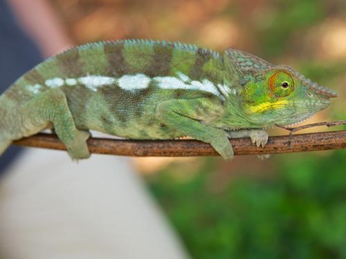 <p>O estudo mostrou que, além de não serem de uma mesma espécie, as cores dos animais também estão relacionadas ao ambiente em que vivem</p>