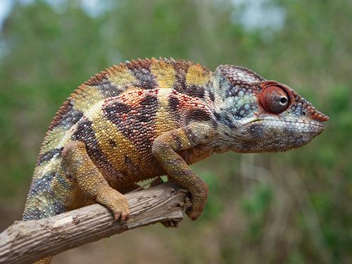 <p>A ilha de Madagascar, no continente africano, é uma das maiores em biodiversidade</p>