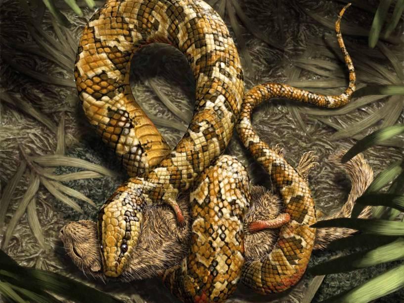 <p>As patinhas do Tetrapodophis amplectus teriam como principal função agarrar as presas, como pequenos mamíferos, ou segurar o par durante o acasalamento.</p>