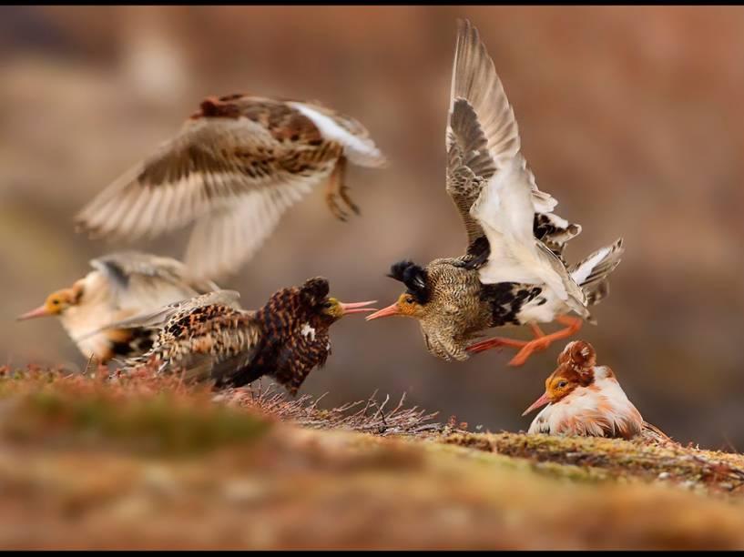 <p>Na categoria 'Jovens Fotógrafos', de participantes entre 11 e 14 anos, o vencedor foi o tcheco Ondrej Pelánek, de 12 anos, com o retrato de uma briga entre pássaros na Península de Varanger, na Noruega.</p>