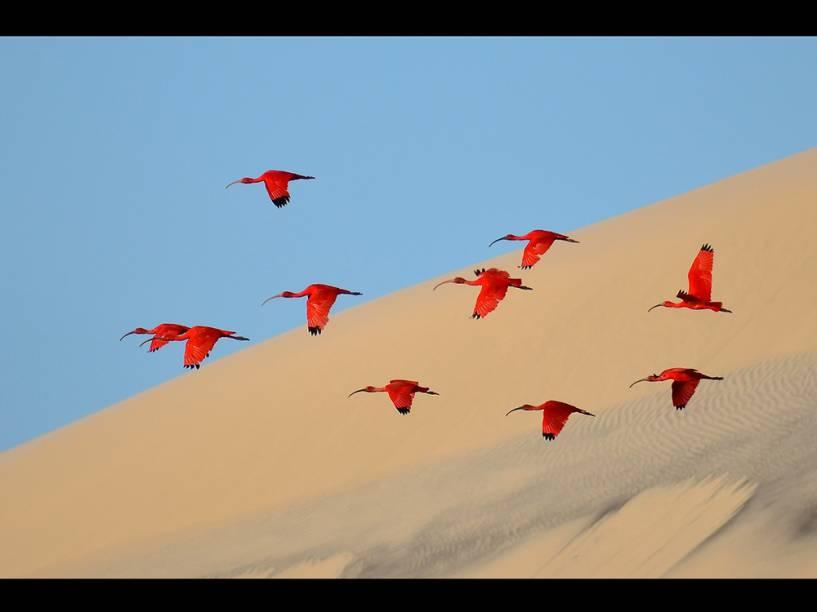 <p>Com uma foto dos guarás, pássaros de asas vermelhas que vivem nos Lençóis Maranhenses, no Nordeste do Brasil, o francês Jonathan Jagot venceu a categoria 'Jovens Fotógrafos' (idade entre 15 e 17 anos). </p>