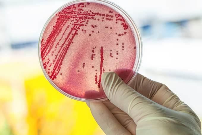 alx_disco_com_bacterias_original.jpeg