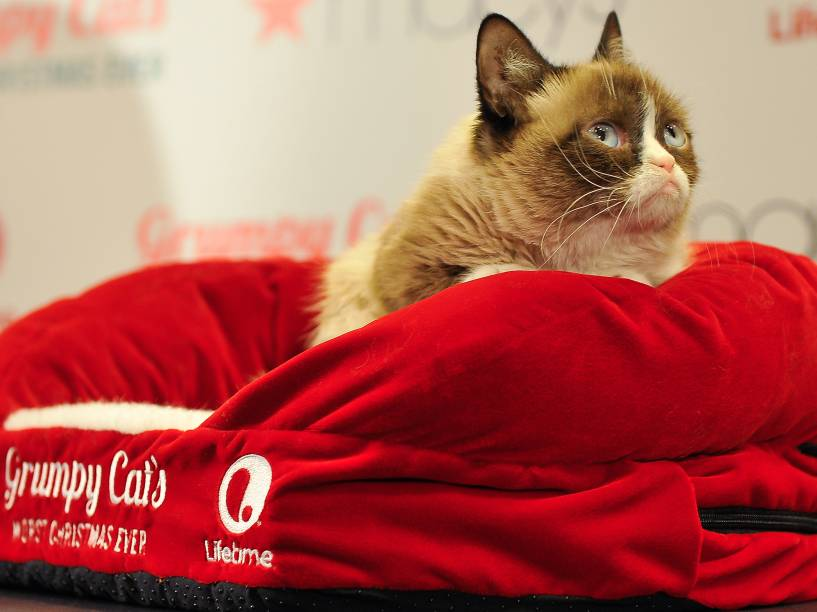 <p>Grumpy Cat</p>