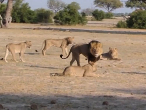 <p>Cecil em meio ao seu grupo, que passou a ser protegido pelo irmão, Jericho, após sua morte</p>