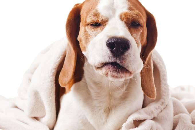 alx_guia-veja-cachorros-20141217-004_original.jpeg