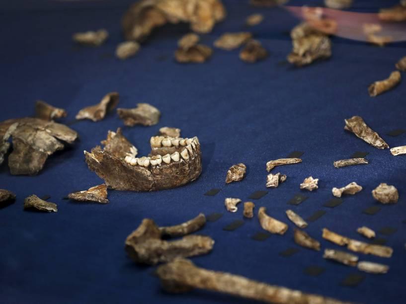 <p>Fósseis da recém descoberta espécie Homo naledi. De acordo com cientistas, a espécie parente dos seres humanos também seria capaz de enterrar seus mortos</p>