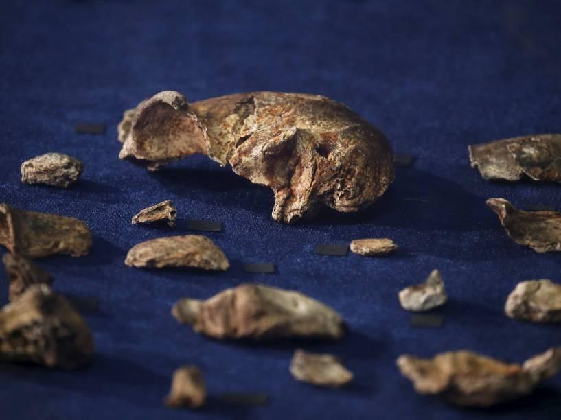 """<p>Fósseis da recém descoberta espécie """"Homo naledi"""", que apresentava uma curiosa mistura entre características humanas e de macacos</p>"""