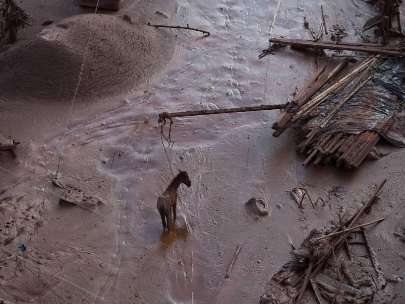 Vista de área atingida pela enxurrada de lama após rompimento de barragem de rejeitos da mineradora Samarco, em Bento Rodrigues, distrito de Mariana (MG), na manhã desta sexta-feira (6). O acidente aconteceu nesta quinta-feira (5) e inundou várias casas. Cerca de 2 mil pessoas foram atingidas diretamente pela tragédia e precisarão deixar suas casas