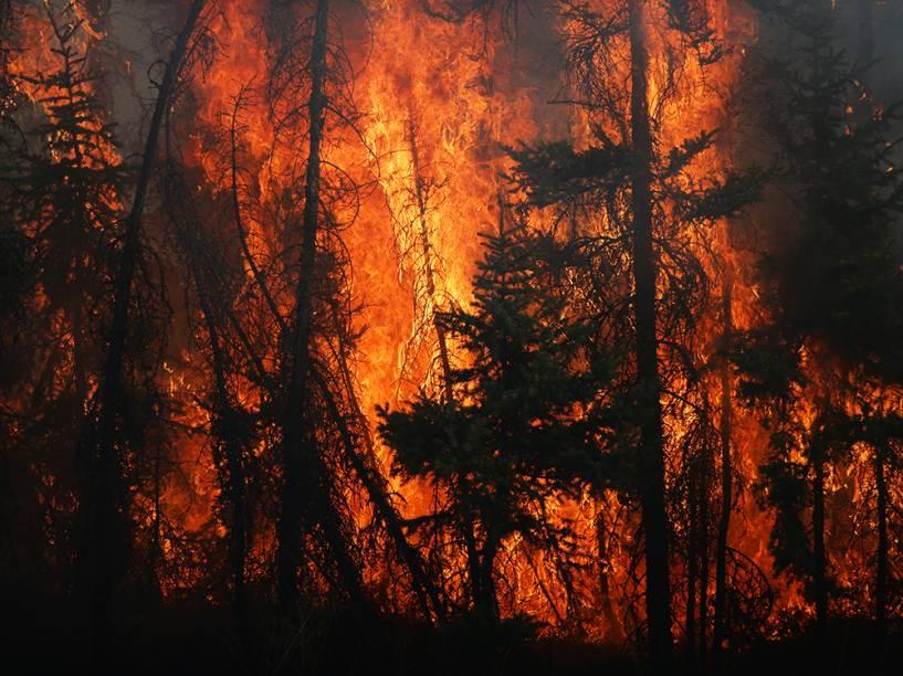 Chamas atingem árvores, durante incêndio na cidade de Fort McMurray, no Canadá. Tal incêndio evacuou mais de 80 mil pessoas do município, que estão sendo levadas à abrigos nas proximidades - 06/05/2016