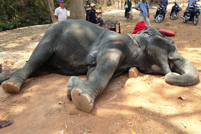alx_mundo-camboja-elefante-morre-forcado-temperatura-alta-20160426-01_original.jpeg