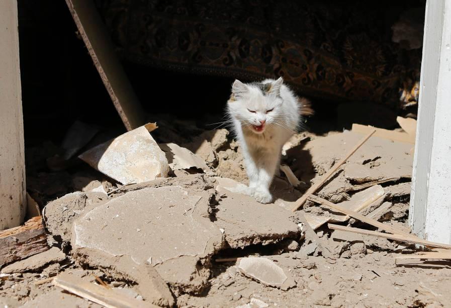 Gato anda entre escombros de casa destruída em recente bombardeio em Ilovaysk, leste da Ucrânia - 31/08/2014