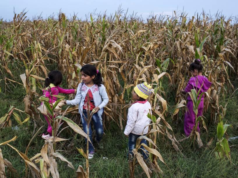 Crianças sírias brincam em um campo de milho depois de cruzarem para a Hungria a partir da fronteira com a Sérvia, perto da aldeia de Röszke - 05/09/2015