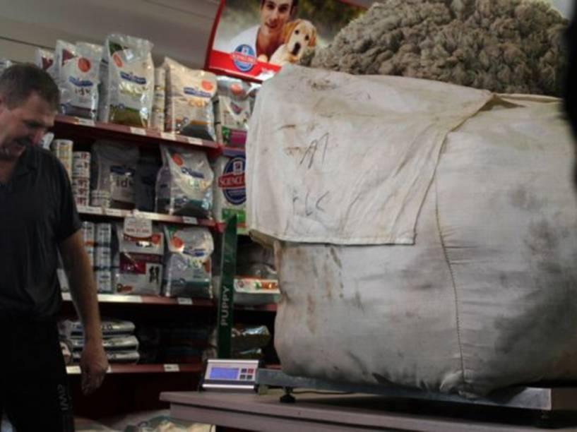 <p>Após ser retirado, o pelo da ovelha Chris, encontrada nos arredores de Camberra, na Austrália, atingiu aproximadamente 40 quilos</p>