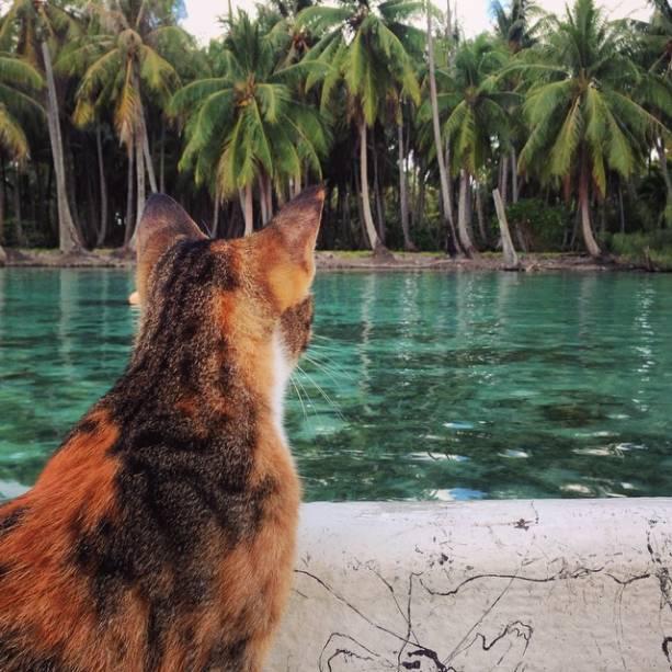 Liz Clark e sua gata, Amelia, navagam ao redor do mundo através de um barco