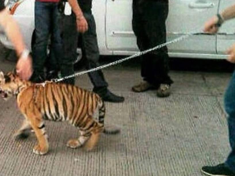 Narcotraficantes exibem um pequeno tigre