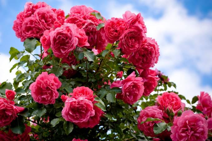 alx_rosas-20090613-01_original-1.jpeg