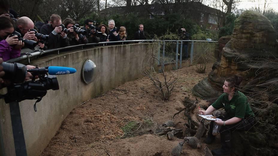 <p>Tratador ao lado de suricatos durante a pesagem anual no Zoológico de Londres</p>