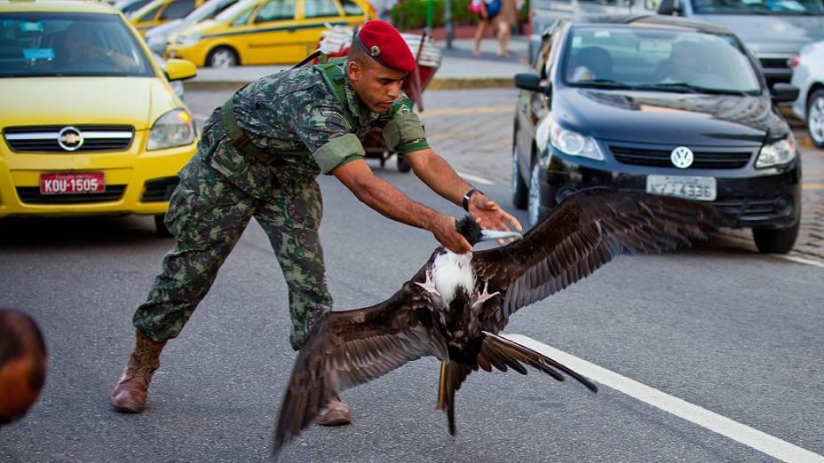 Soldado do Exército salva um pássaro que fez um pouso forçado em Copacabana, na Avenida Atlântica, após se enroscar em linha de pipa