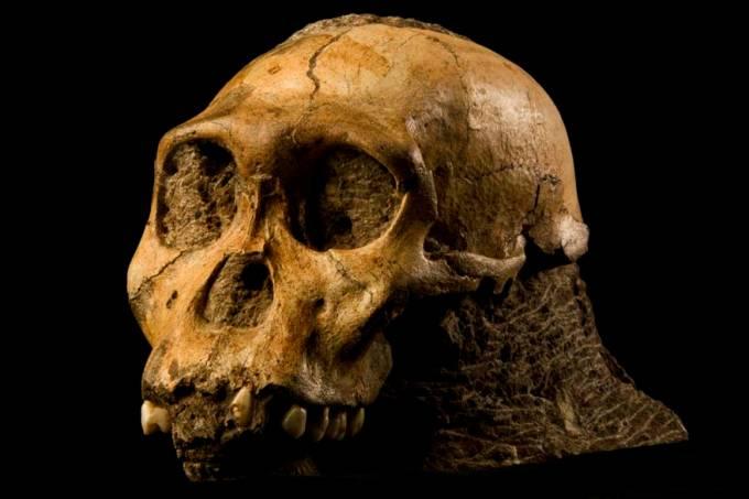 australopithecus-sediba-20100318-01-original.jpeg
