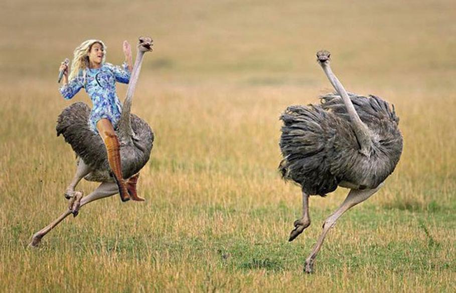 Beyoncé foi incluída em uma corrida de avestruzes