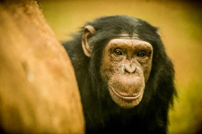 brasil-zoo-sp-peca-20130911-010-original.jpeg