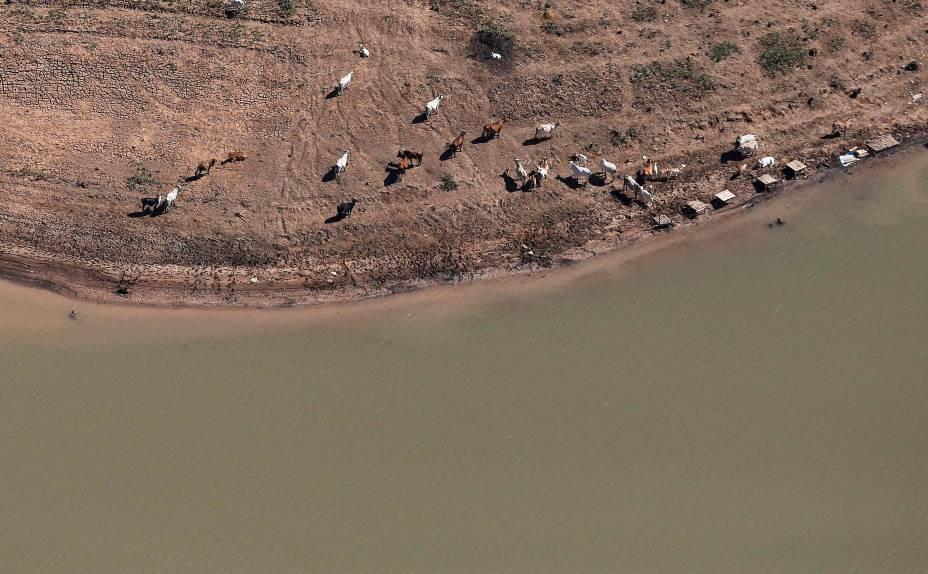 <p>Animais nas margens da represa de Jaguari, parte do Sistema Cantareira, em Bragança Paulista</p>