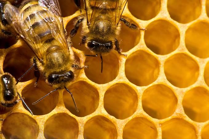ciencia-animais-abelhas-apicultura-20140130-004-original.jpeg