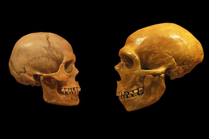 ciencia-cranio-homo-sapiens-neanderthal-20130313-01-original.png
