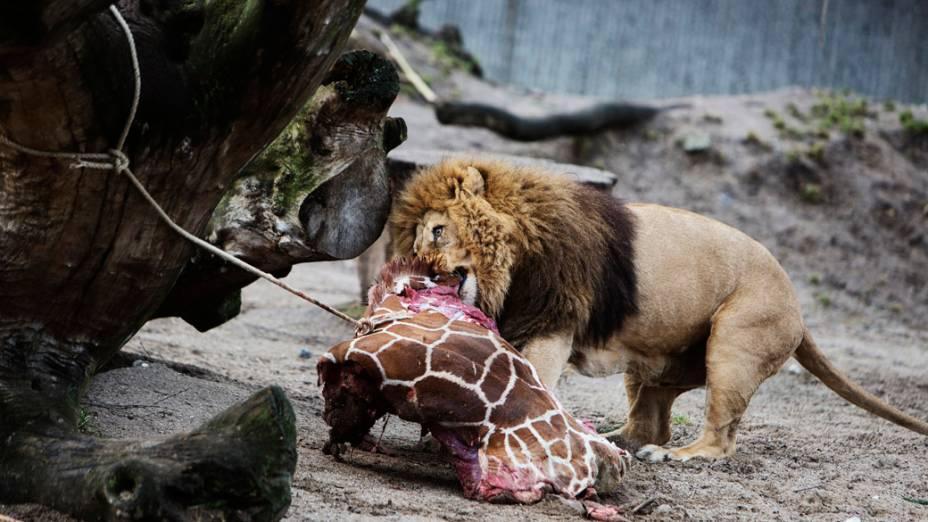 <p>O corpo despedaçado do filhote foi utilizado para alimentar outros animais do parque</p>