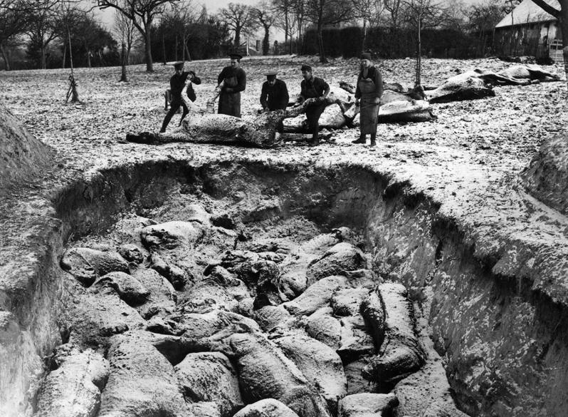 Soldados enterram os cavalos mortos em batalha na I Guerra Mundial