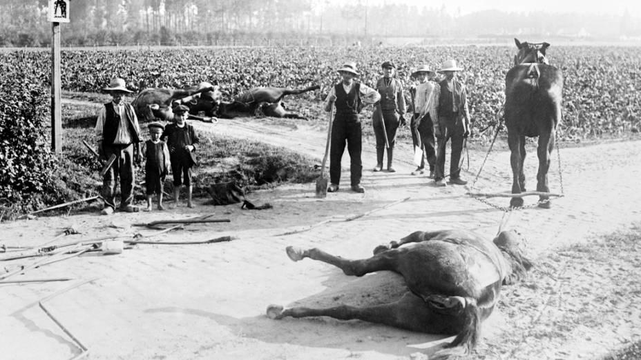 Civis seguram pás para enterrar os cavalos mortos em batalhas da I Guerra Mundial, na Bélgica
