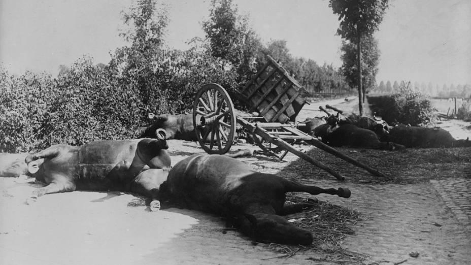 Cavalos mortos durante a I Guerra Mundial