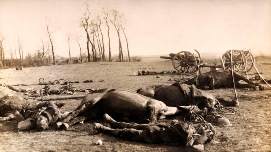 Cavalos de soldados britânicos mortos após uma batalha na I Guerra Mundial