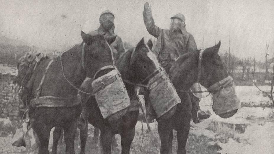 Máscaras de gás para cavalos
