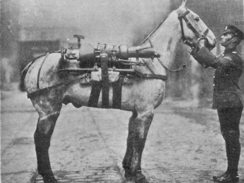 Cavalo equipado com um metralhadora durante a I Guerra Mundial