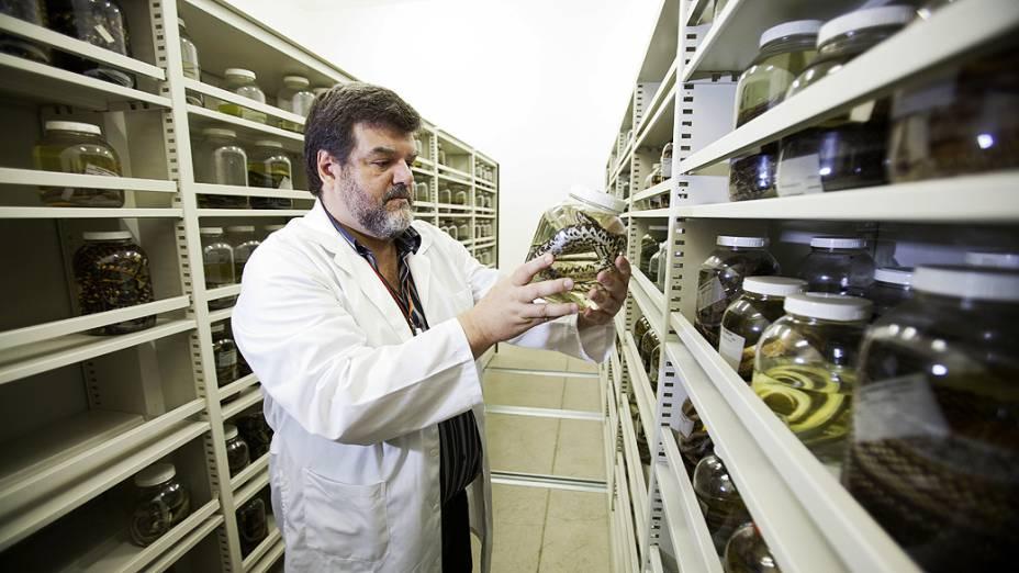 <p>Pesquisador do laboratório de herpetologia do Instituto Butantan, Francisco Luis Franco, observa uma amostra de serpentes. O edifício de coleções zoológicas foi reinaugurado nesta terça-feira (24) após incêndio que destruiu parte do acervo do Instituto em 2010</p>